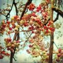 Drobne jagody, ozdobne jabłuszka… czyli naturalna biżuteria ogrodu