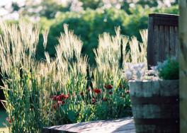 Trawy w ogrodzie, czyli sposób na to, aby stworzyć przytulny zakątek