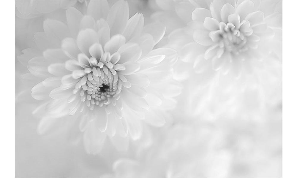 Biel w ogrodzie czy ogród w bieli? W poszukiwaniu ogrodu idealnego…