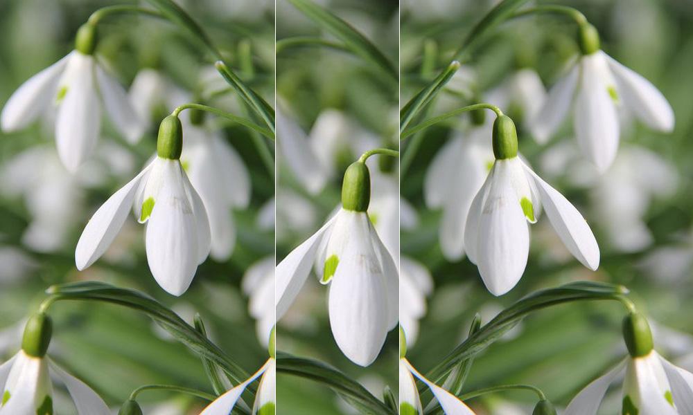 Co zrobić, aby w lutym Twój ogród tonął w kwiatach?