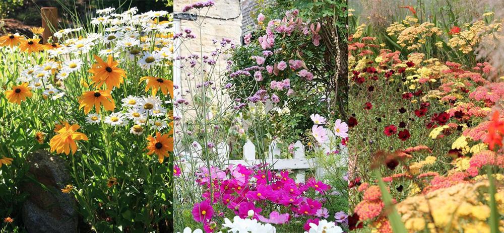 Lato na życzenie, czyli 10 roślin kwitnących jesienią